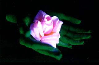 flowerfingers